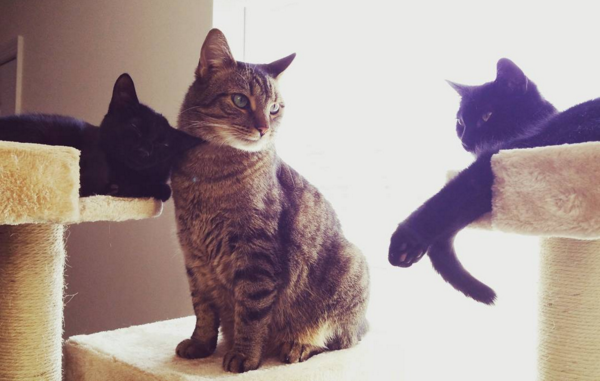 The Kitty Brigade